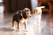Pet-safe Engineered Hardwood Flooring